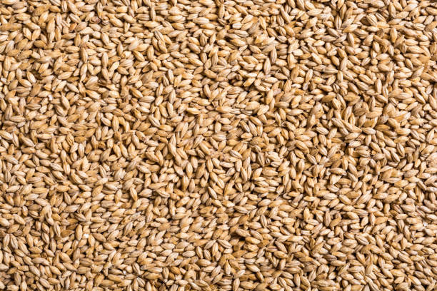 texture of malt pilsner - barley stock pictures, royalty-free photos & images