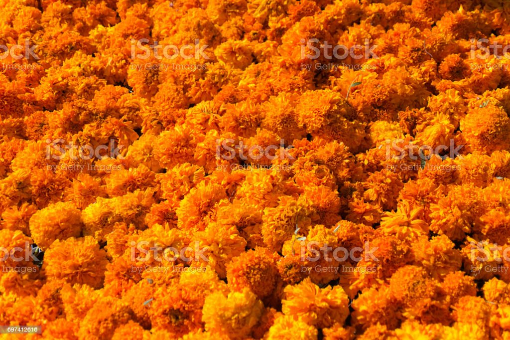 Texture of Marigold Flower stock photo