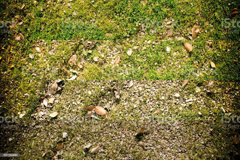Texture of moss on the wall, cracked background, stone surface stock photo