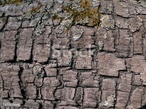 istock Texture of Old Dry Tree 2 147255449