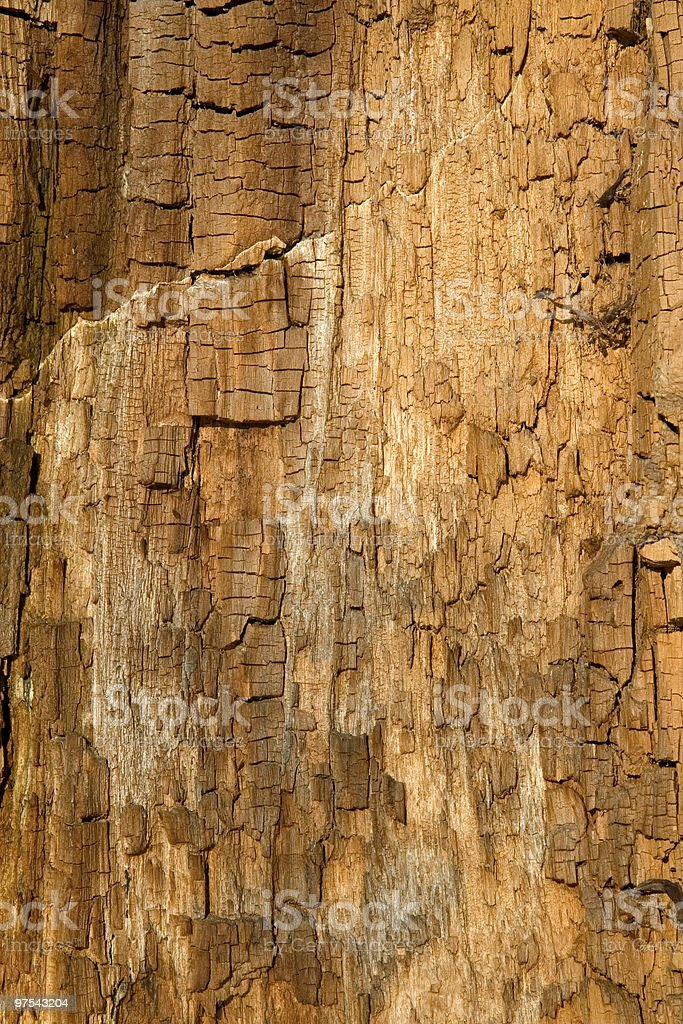 Texture of old dry wood royalty-free stock photo