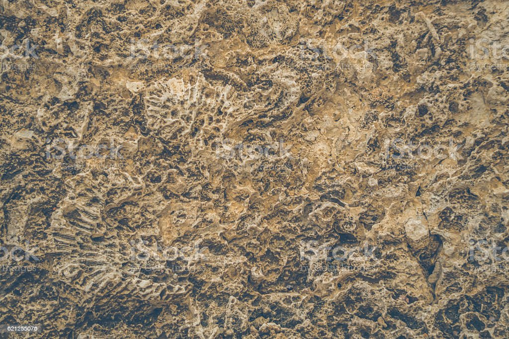 Texture of old stone. Fossilized coral reef stock photo