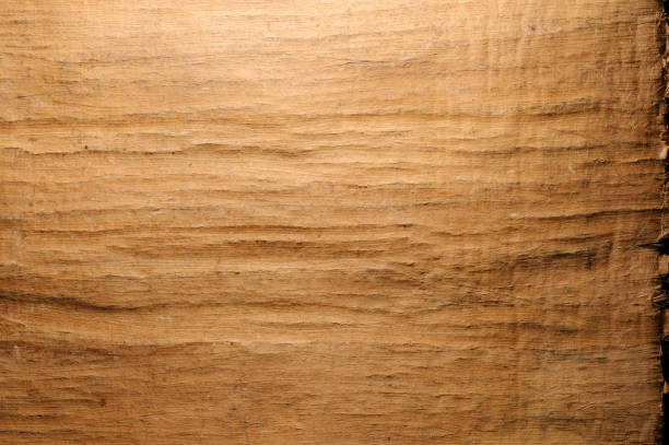 Texture of papyrus paper, natural background. Texture of papyrus paper, natural background. antecedence stock pictures, royalty-free photos & images
