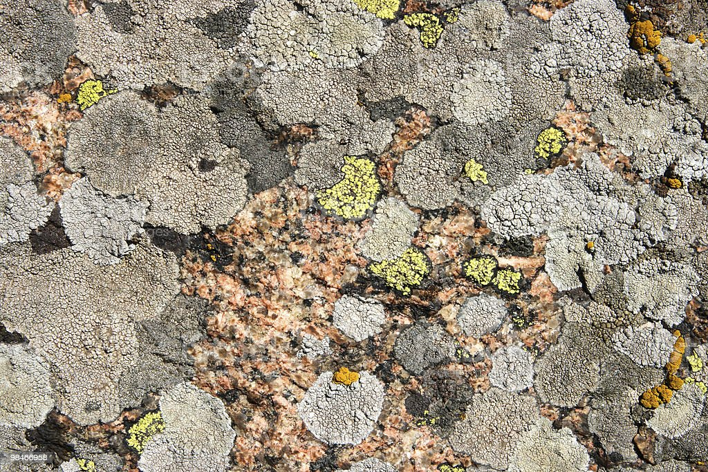texture of stone, moss, lichen royalty-free stock photo