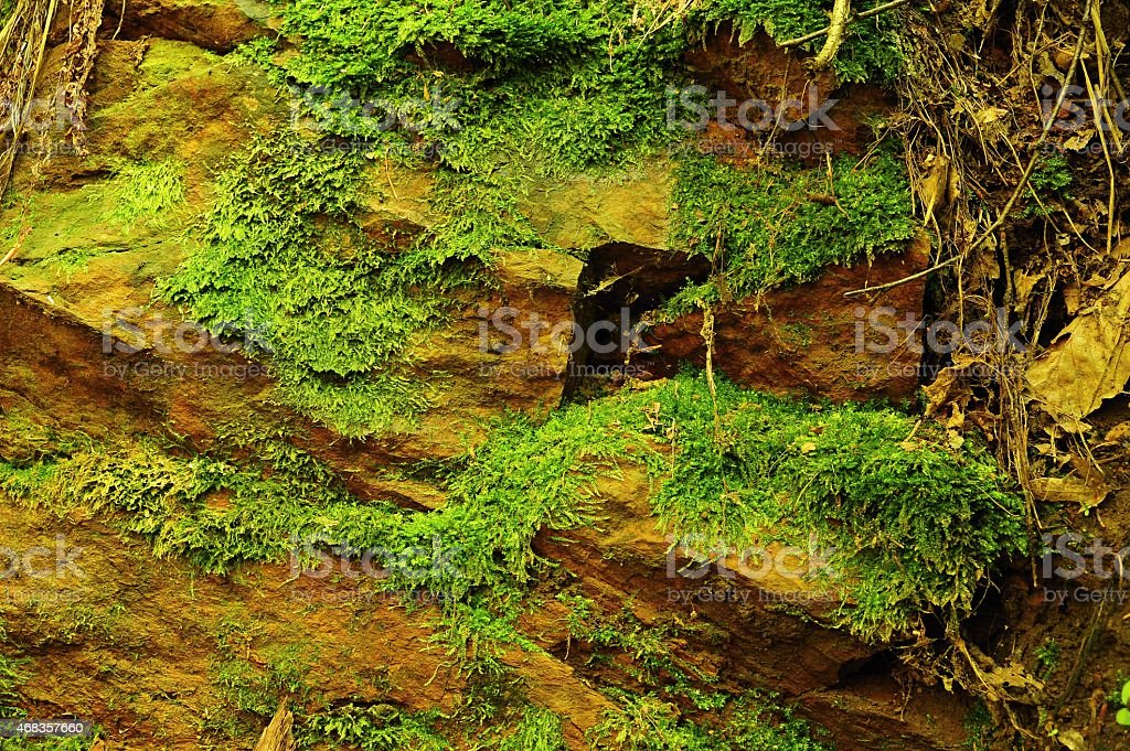 Texture of stone with moss royalty-free stock photo