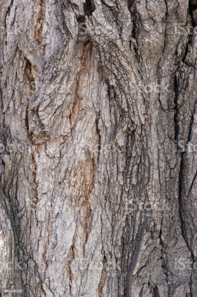 Texture of strong bark of an old tree royalty-free stock photo