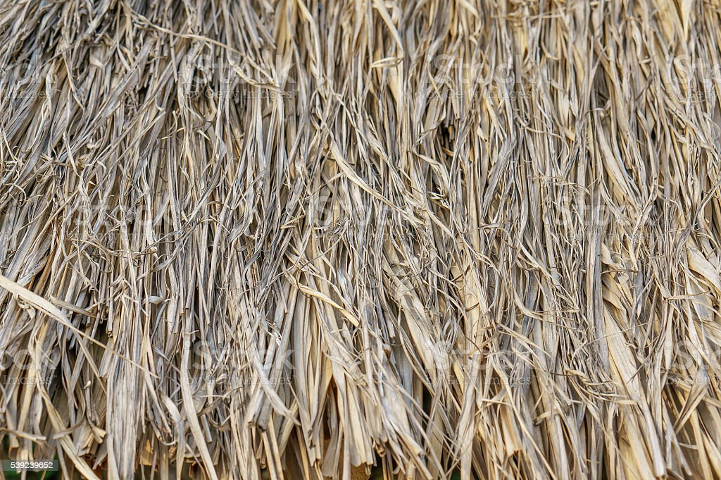 texture of Thatched from Imperata cylindrica royalty-free stock photo