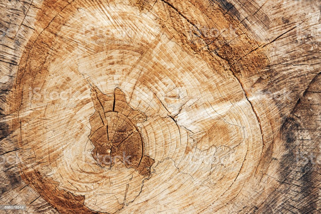 Texture of the old cut of tree royalty-free stock photo