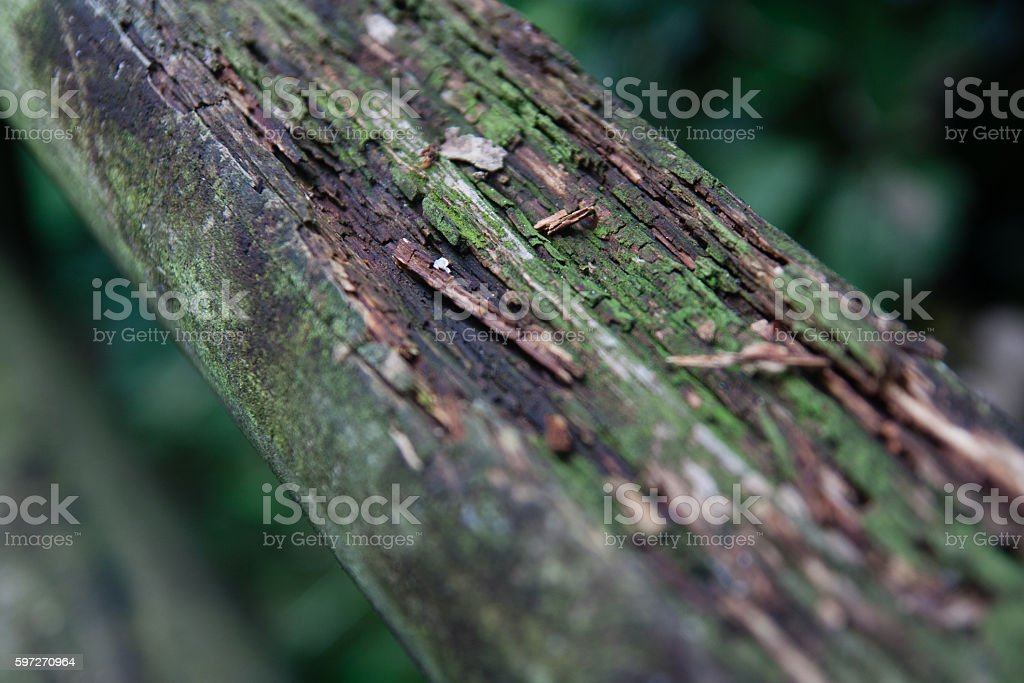 Texture of the tree in the deep forest royalty-free stock photo