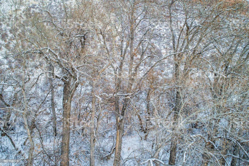 texture of trees with snow stock photo