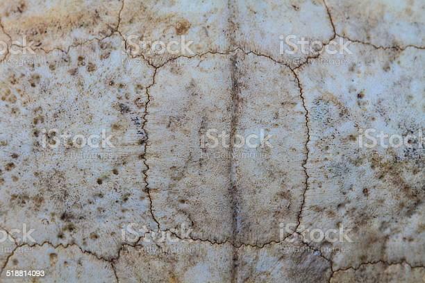 Texture of turtle carapace picture id518814093?b=1&k=6&m=518814093&s=612x612&h=j14aqwezmi2c9atwu0iutdi dqw0fustizir98qm mi=