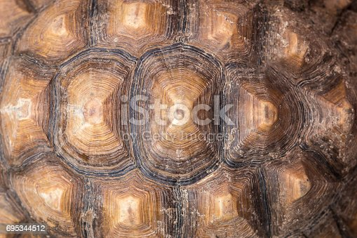 istock Texture of Turtle carapace. 695344512