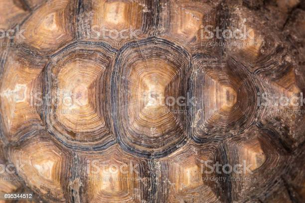 Texture of turtle carapace picture id695344512?b=1&k=6&m=695344512&s=612x612&h=cpr0eedgihjt7akqlj7wis3p ohh8nt13p ndc2rxk8=