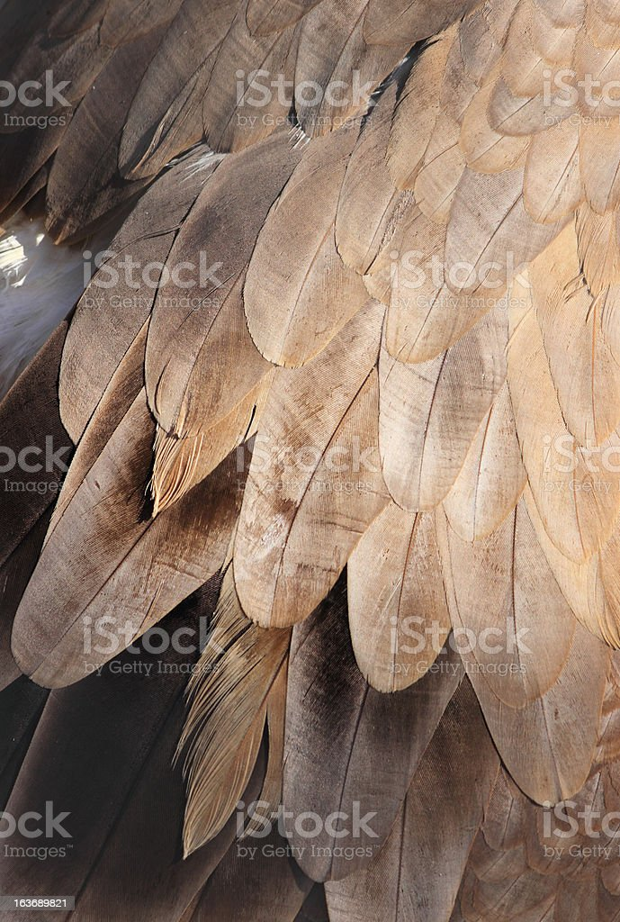 Texture of Vulture's Wing royalty-free stock photo
