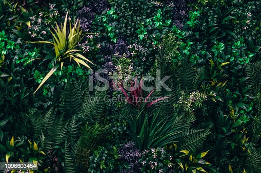 flower, decorations,, Textured Effect, Green Color, Wall - Building Feature, Grass, Backgrounds, Nature,