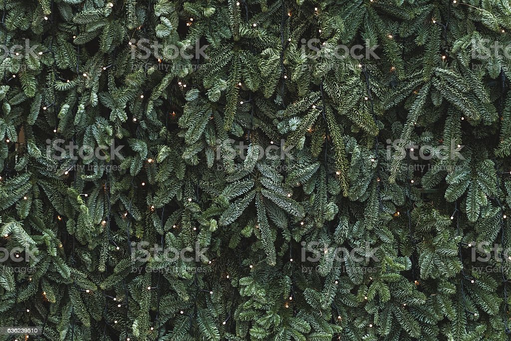 Texture of wall decorated with garlands and green pine fir stock photo