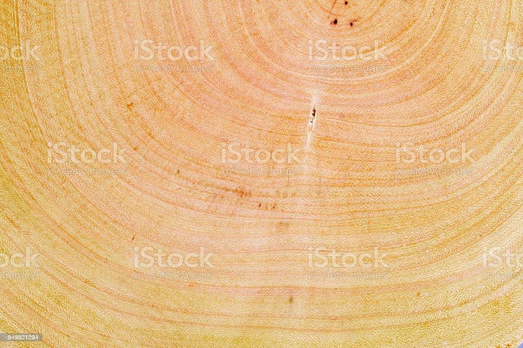 textura de fondo de tronco de árbol de madera. - foto de stock