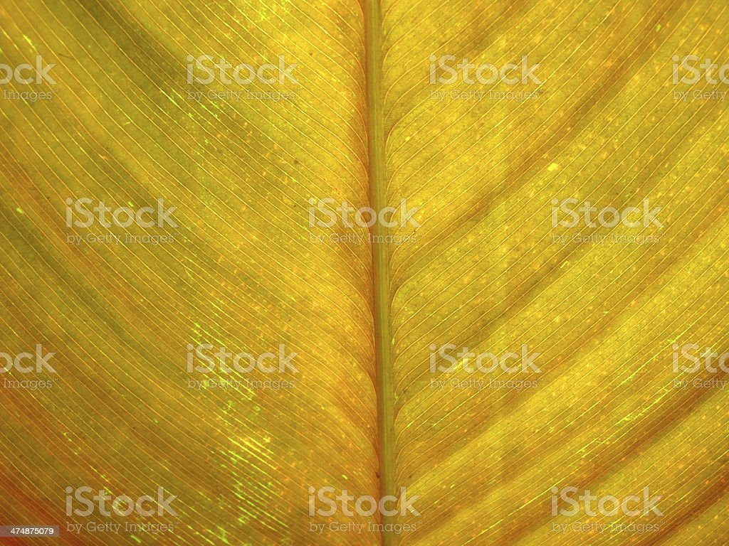 Texture of yellow leaf stock photo