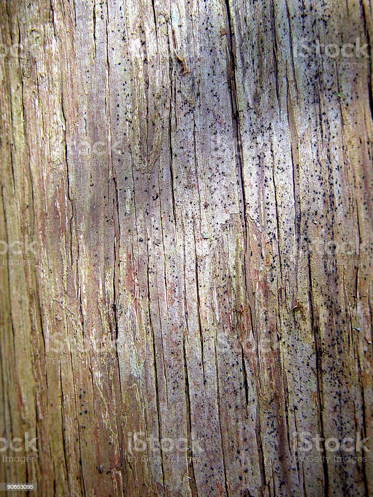 Texture, Old Tree Surface royalty-free stock photo