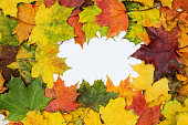Texture or background in the form of an isolated frame from autumn maple leaves.