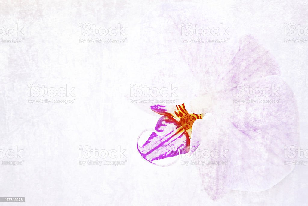 Texture orchid. royalty-free stock photo