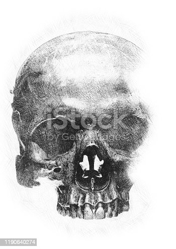 Background pencil sketch on paper of the human skull