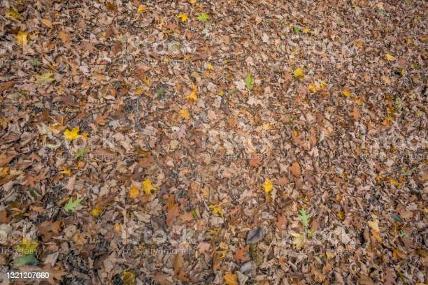 Photo of A Texture Shot of a Leaf-Covered Forest Floor during Autumn