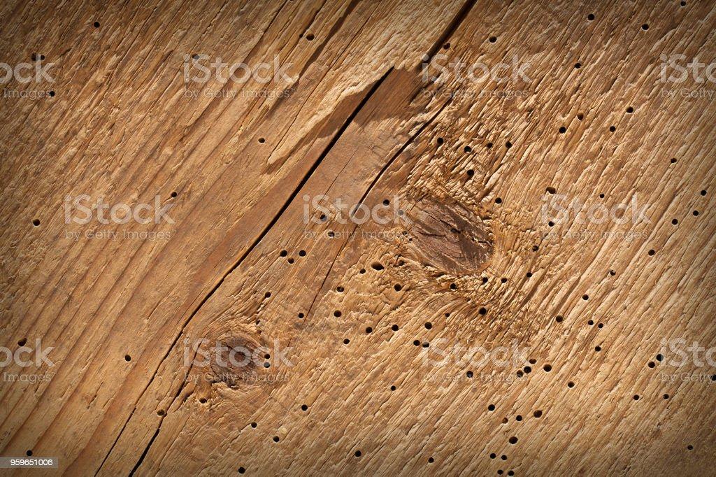 Fondo madera de textura, mordido por un escarabajo de corteza. - Foto de stock de Aire libre libre de derechos