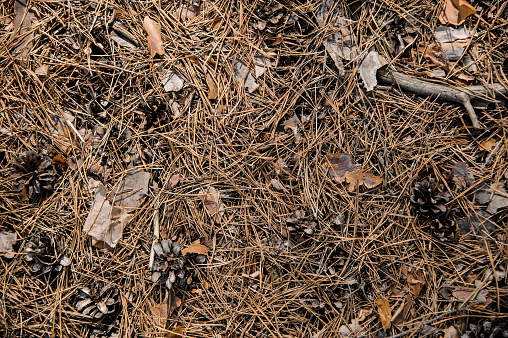 Textured background of the autumn forest floor
