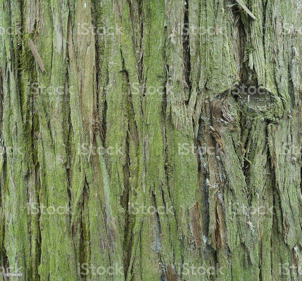 textured bark detail royalty-free stock photo