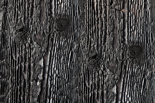 istock Textured charred wood. 1016635842