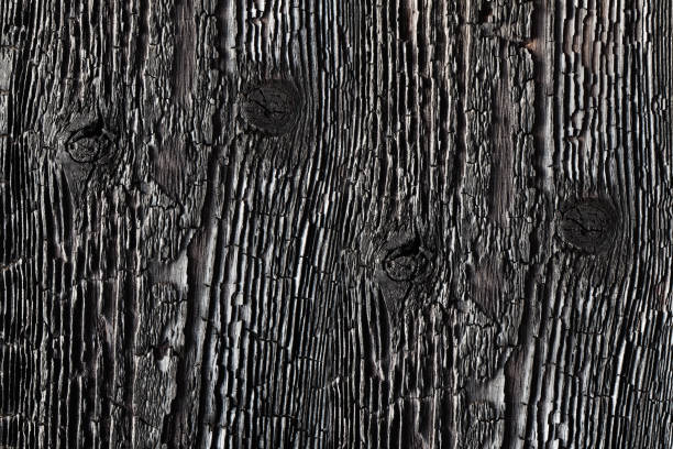 Textured charred wood. stock photo