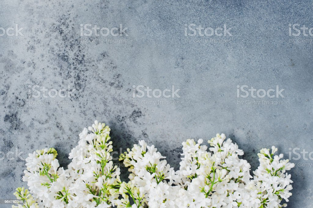Textured gray background with brunches of blooming white lilac royalty-free stock photo