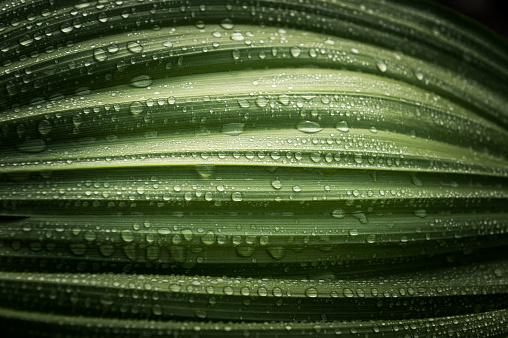 green leaf, drop, dew, dark background, macro,