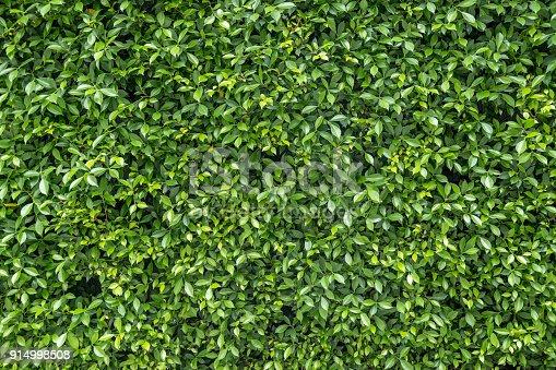 istock Textured green vertical garden background 914998508