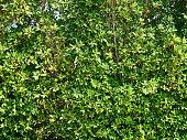 Textured green vertical in garden background