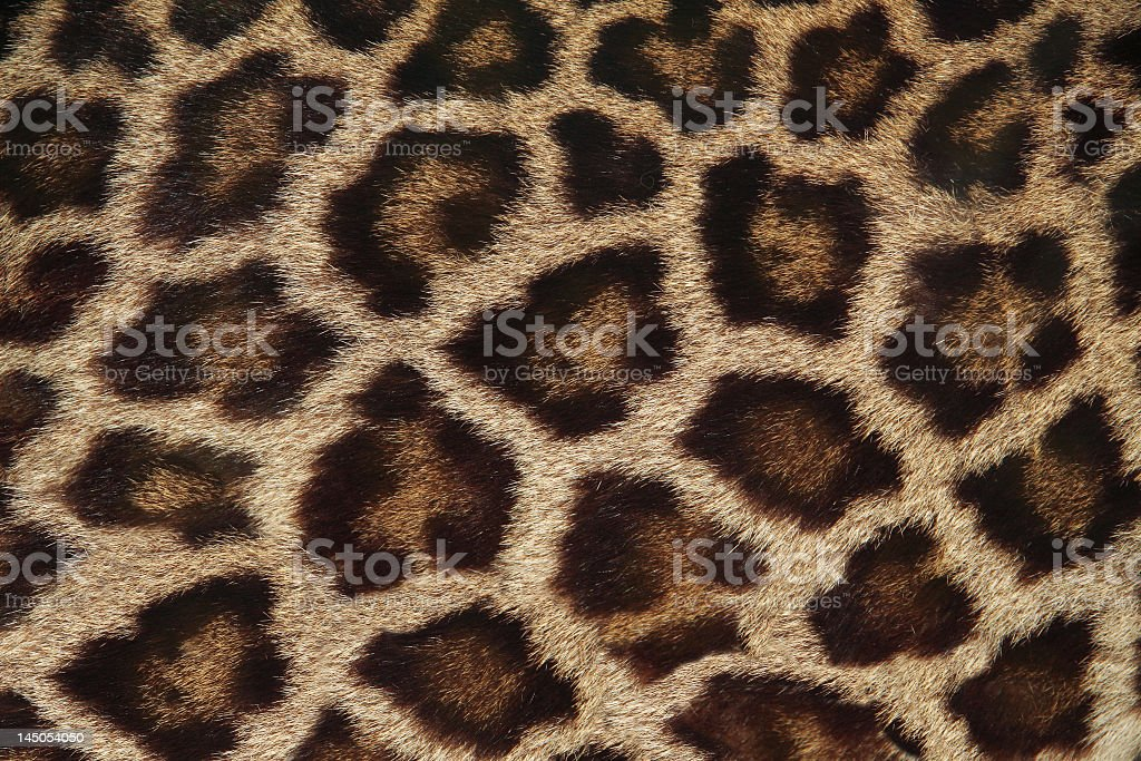 Textured leopard fur patterned background royalty-free stock photo