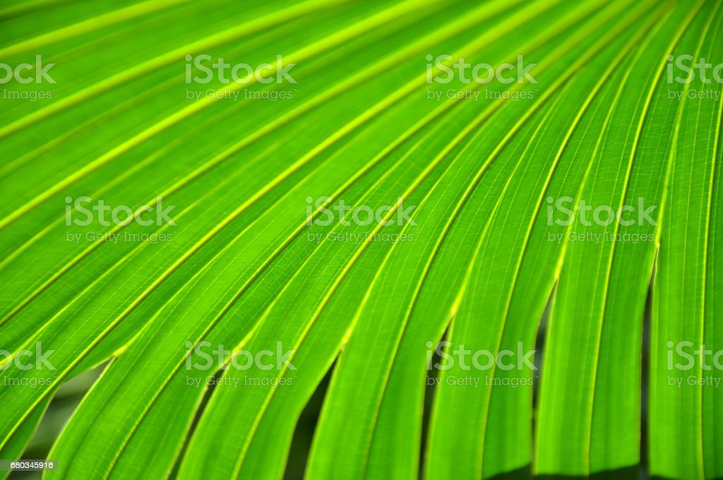Textured palm tree leaves. royalty-free stock photo