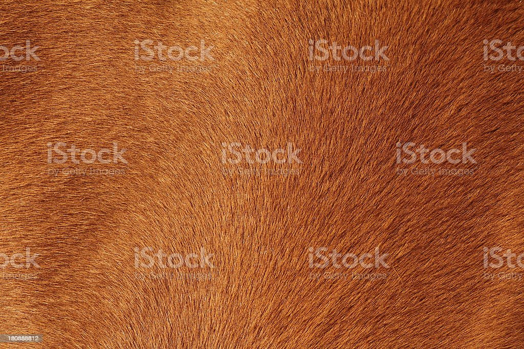 textured pelt of a brown horse stock photo