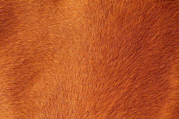 texture pelt d'un cheval brun - fourrure photos et images de collection