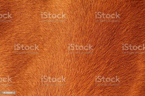 Photo of textured pelt of a brown horse