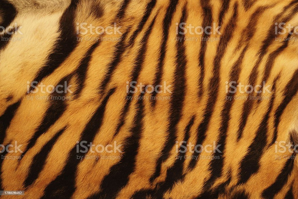 textured tiger fur stock photo