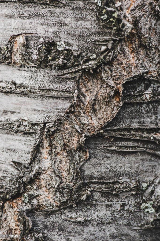 Strukturierte Baumrinde mit Brüchen und Rissen - Lizenzfrei Bauholz Stock-Foto