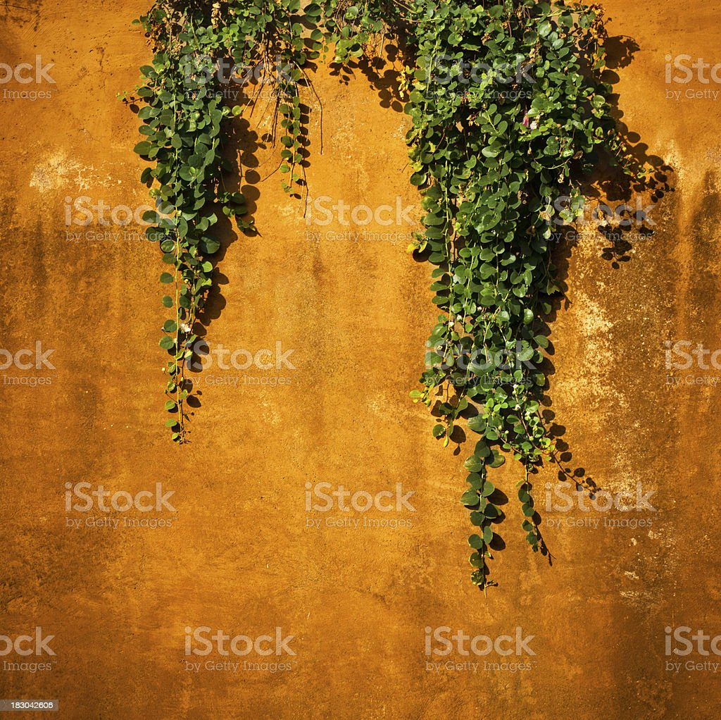 textured wall with hanging plant royalty-free stock photo