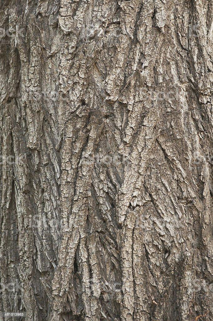 Textures Tree Stock Photo Download Image Now Istock