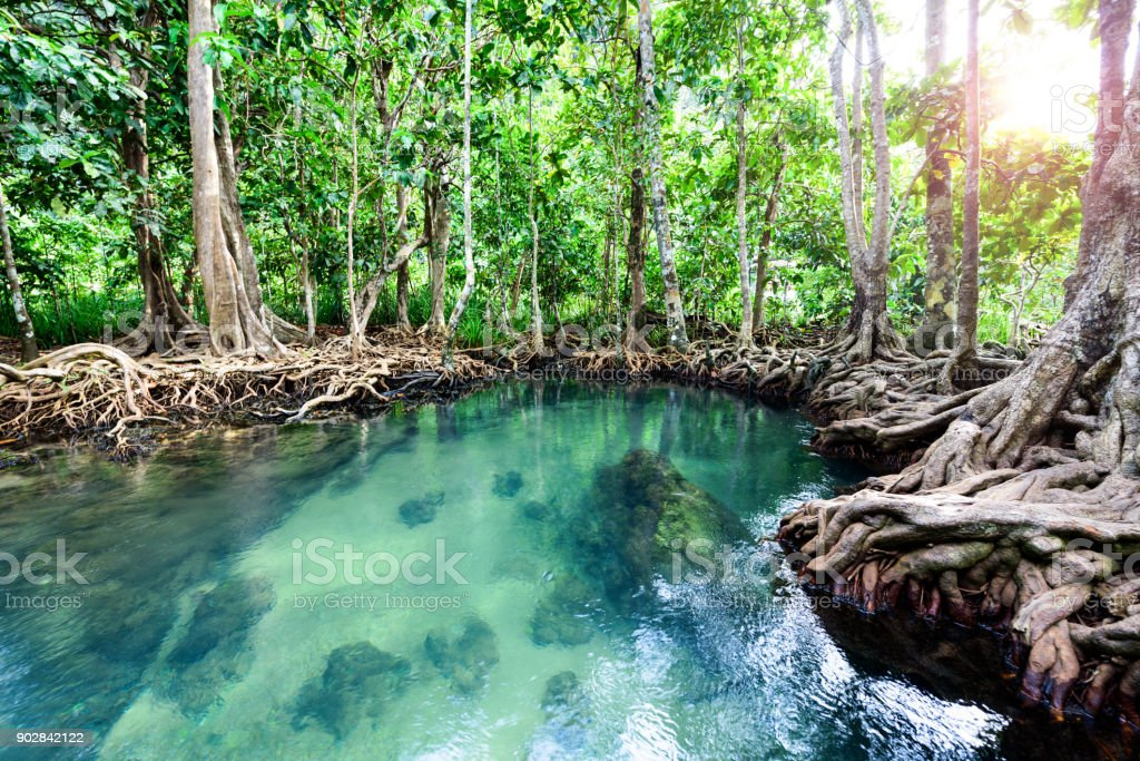 Tha Pom Khlong Song Nam, Two Water Canal, Krabi, Thailand stock photo