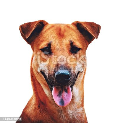 istock Thai brown dog looking at the camera 1149044529