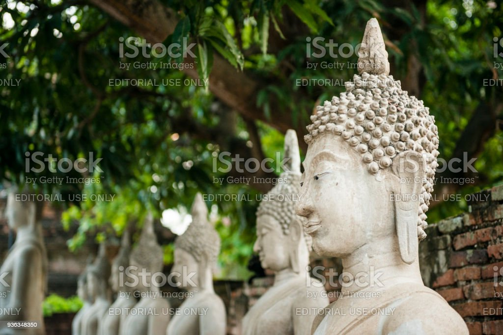 Thai Buddha Heads in Ancient City Temple Ayuthaya Thailand stock photo