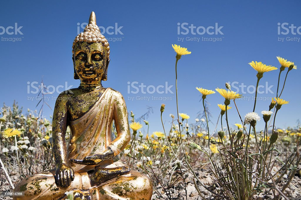 Thai Buddha in Field of Flowers royalty-free stock photo