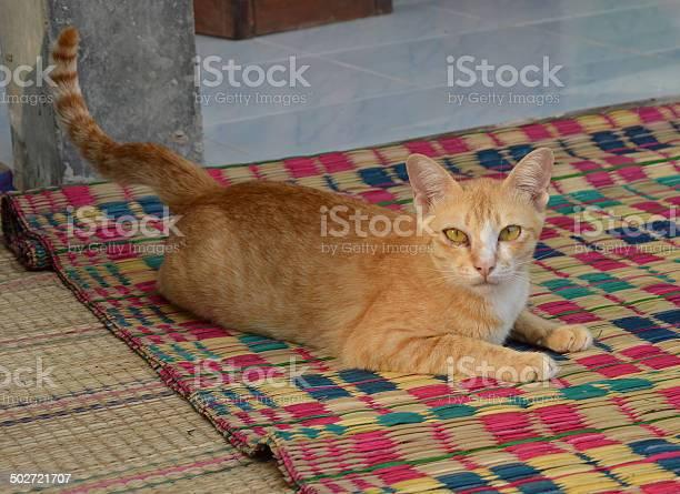 Thai cat picture id502721707?b=1&k=6&m=502721707&s=612x612&h=g1jrqekij9dj5b6rr h m0bidp5j2sbeqfkqb jk7fs=